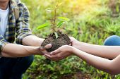 Couple Planting And Watering A Tree Together On A Summer Day In Park, Volunteering, Charity People A poster