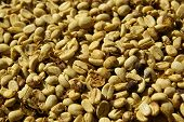 Dried Coffee Beans