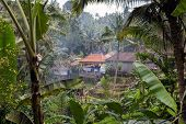 Beautiful Landscape Of A Tropical Indonesian Rainforest. Palm Trees And A Village Near poster