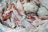 Fresh Squid On A Market Stall. Closeup Fresh Squid On The Market. Fresh Seafood. Fresh Seafood Marke poster
