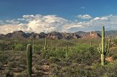 stock photo of superstition mountains  - Beautiful view of saguaros in Superstition Wilderness in Sonoran Desert - JPG