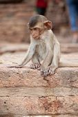 Cute little baby monkey sitting by the side of the road. Macaque close-up portrait. Monkey life amon poster