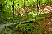 picture of centenarian  - Forest With Footpath And Small Bridge In Springtime - JPG