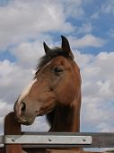 Bay Horse Head Shot Against A Blue Sky