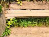Wooden Steps, Walkway, Beautiful Tropical Garden With Exotic Plants And Flowers. Green Floral Backgr poster