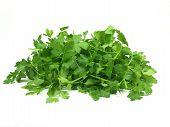 stock photo of italian parsley  - fresh green italian parsley on white background - JPG