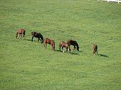 Kentucky-Pferde