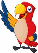Macaw bid carton waving