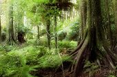 stock photo of jungle  - New Zealand tropical forest jungle - JPG