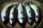 stock photo of plate fish food  - Raw mackerel fish. Sea food on metal plate