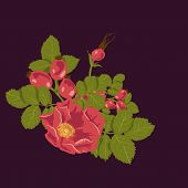 image of wild-brier  - Floral background with wild rose - JPG