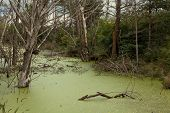 Swampy pond in the never ending Belarusian woods