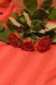 Flowers, Roses