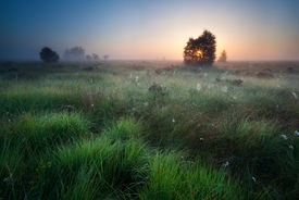 stock photo of marshes  - foggy sunrise over marsh with spidernets ans cotton - JPG