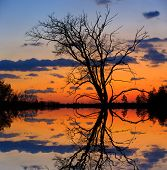 leafless tree on sunset background near lake