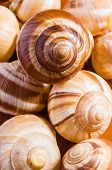 stock photo of escargot  - Group of snail shells escargots de Bourgogne under the sunlight - JPG
