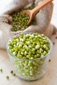 picture of bean sprouts  - green mung bean sprouts in bowl and hessian bag with seeds and spoon - JPG