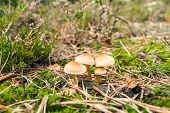 Mushrooms In An Autumn Forest In A Sunny Day
