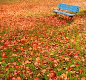 Bench Park Autumn Leaves