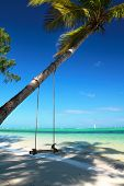 stock photo of seesaw  - Seesaw on coconut palm - JPG