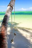Swing On Palm Tree
