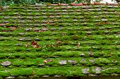 Old Roof Farmhouse Covered With Green Moss