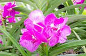 Beautiful orchids