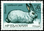 Vintage  Postage Stamp. French Silvery Rabbit.