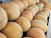 Rows Of Cantaloupes