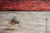 snail crawling across wood plank