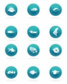 a set of twelve blue round icons with white silhouettes of fishes