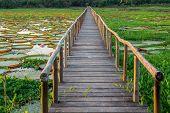 Brazilian Panantal, Victoria Regia plant and wooden footbridge