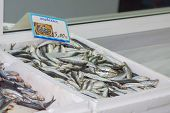 Tray with fresh anchovies
