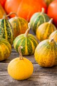 Ripe Organic Colored Pumpkins