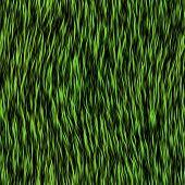 Grass Fur Seamless Generated Texture