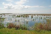 stock photo of boggy  - Swampy area with grass and sedge - JPG