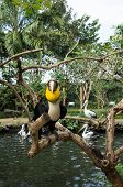 Yellow Billed Hornbill Against A Pond With Pelicans