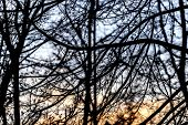 Black Silhouette Of Branches Of The Winter Sky