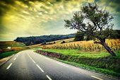 image of curvy  - Curvy road at autumn sunset - JPG