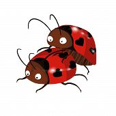 stock photo of copulation  - These ladybugs know that spring has come - JPG