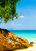 Jungle Lagoon Romantic Island