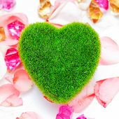 Green Heart On A Pink Rose Quickly.