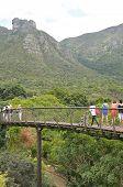 Kirstenbosch Tree Canopy Walkway, The Boomslang