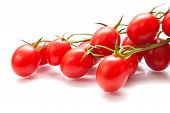 picture of plum tomato  - plum tomatoes on the vine on white surface isolated - JPG
