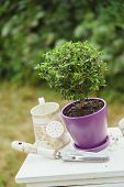 composition of vintage pots and watering can on white bureau outdoors