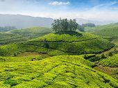Indian tea concept background - tea plantations. Munnar, Kerala, India