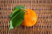 Tangerine Citrus Fruits On White Background