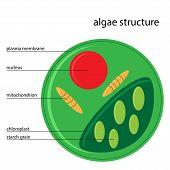 vector Algae Structure