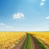 dirty road in yellow field under blue light sky