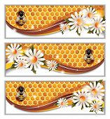 Vector set of Three Colorful Honey Banners with Flowers, Honeycombs and Working Bees